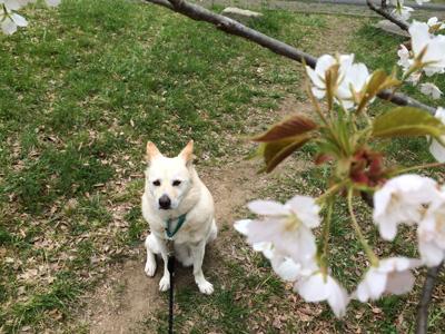 桜と福.jpg